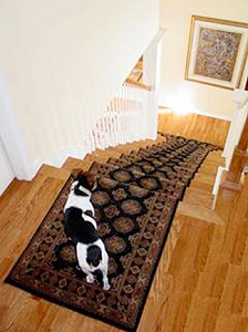 stair-runner-dog1